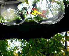 Jelly Bean and Hercules - two fish in their bowls... up a tree